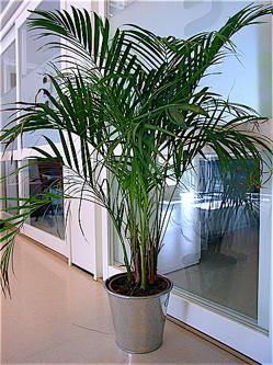 oxygen producing plants, clean air plants, air cleaning plants, air purifying plants