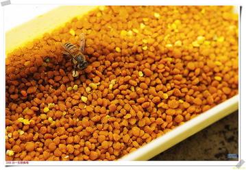 bee pollen benefits, benefits of taking bee pollen, bee pollen granules, bee pollen information, bee pollen vitamins