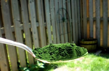 chlorella facts. health benefits of chlorella, detoxing your body, live superfoods