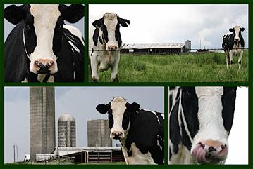 health benefits of colostrum, colostrum benefits, colostrum milk, bovine colostrum, antiaging food