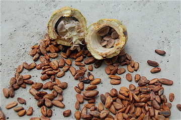 cacao beans, raw cacao, health benefits of chocolate, raw cacao benefits, cacao pod