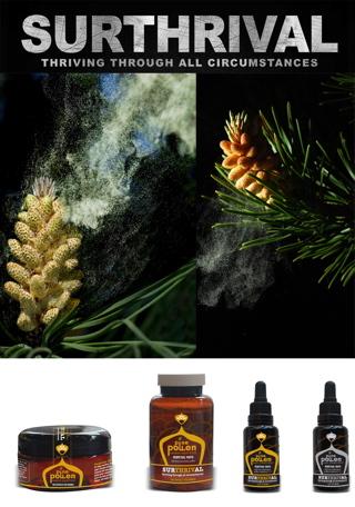 pine pollen powder, pine tree pollen, pine pollen benefits, pine pollen testosterone
